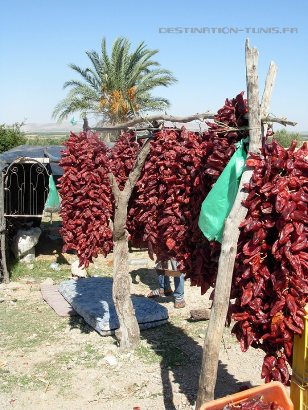 Sechage-des-piments-rouges